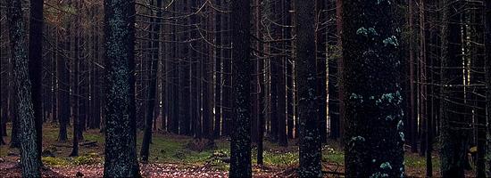 Страшный волк в мистическом лесу