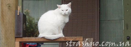 Белая кошка на балконе у соседей