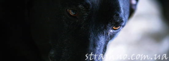 Страшилка про черного зверя