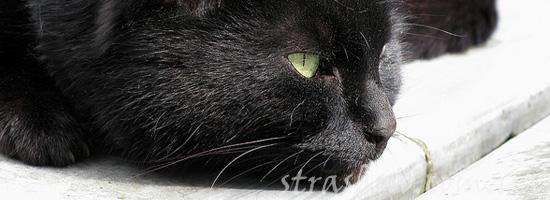 Мистическая история о черном коте