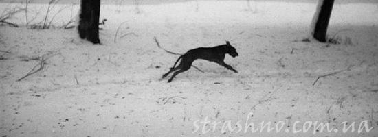 Мистический черный пес