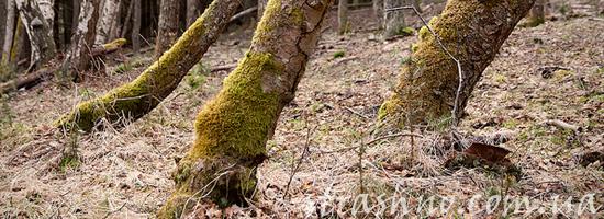 Потерявшаяся в лесу девочка