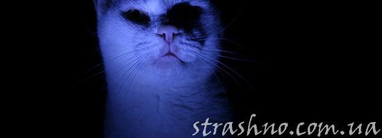 Страшная история о белом котенке