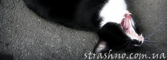 Странная кошка на кладбище