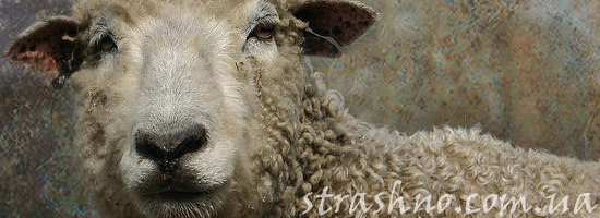 Страшилка о ворующих овец чертях
