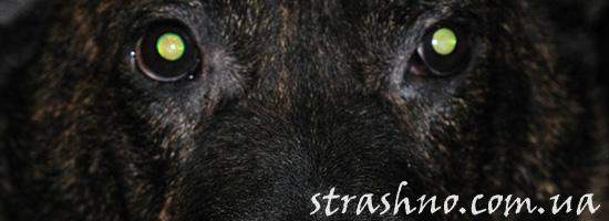 Страшная история о черном волкодаве