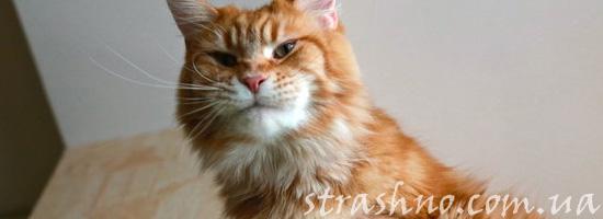 Встревоженный домовым кот