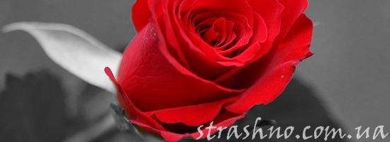 Страшилка про розы
