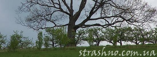 Ведьма на большом дереве