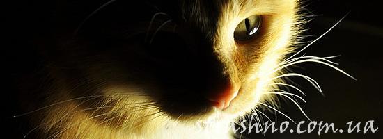 Как кошка охраняет сон