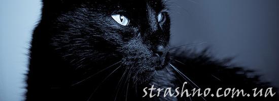 Черный кот-защитник