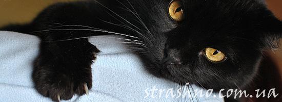 Страшилка про вызов наглого кота