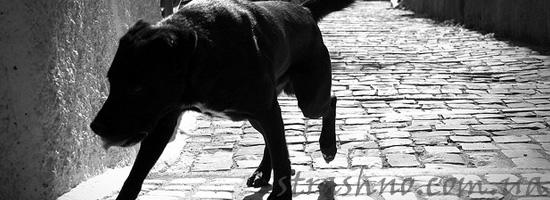 История про черную собаку