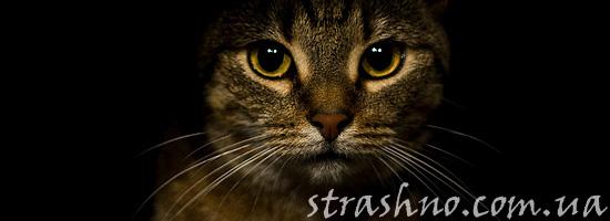 Страшный невидимый кот