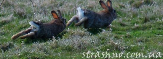 Убегающие зайцы