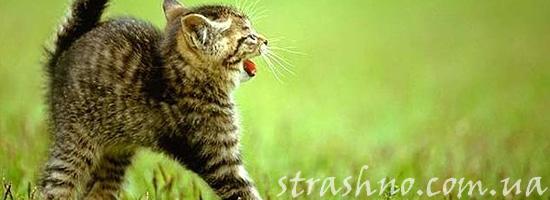 Мистическая история о говорящем котенке