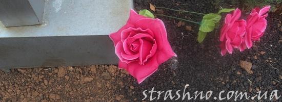 Розы на кладбище