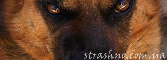 Мистический рассказ о страшной собаке