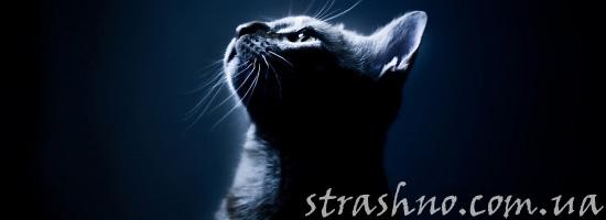 Мистический рассказ про котенка