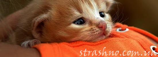 Душещипательная история о котенке