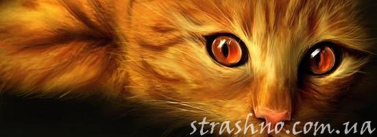 Защита кота от мистического существа