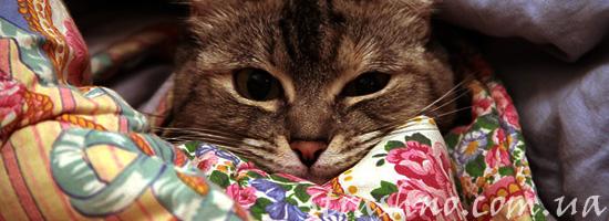 Домовой любит кошек