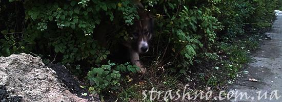 Страшная находка в кустах