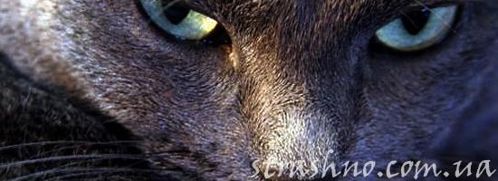 Месть замученного кота