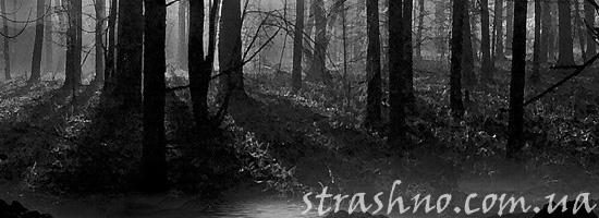 Огни в страшном лесу