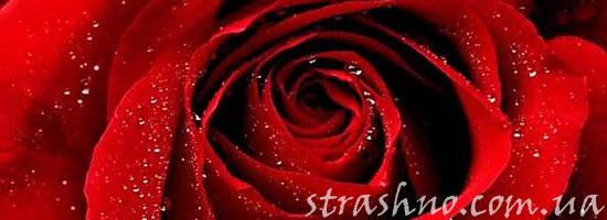 Мистическая роза
