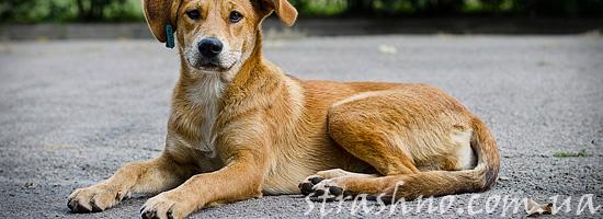 Бездомный пес-спаситель