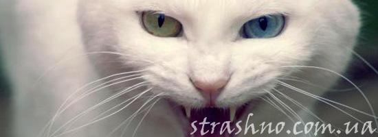 Злая белая кошка