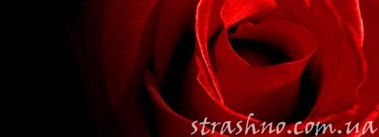Страшилка о розах и кладбище