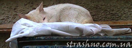 История о несчастном белом коте