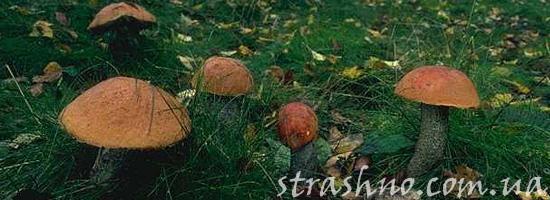 Грибы в ведьмином лесу