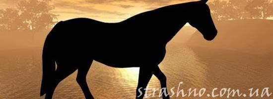 Белый конь ночью