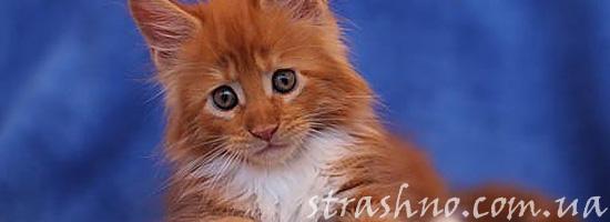 Котенок с горящим хвостом