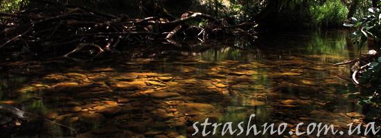 Светящаяся река