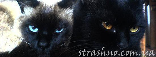 Мистический рассказ о котах