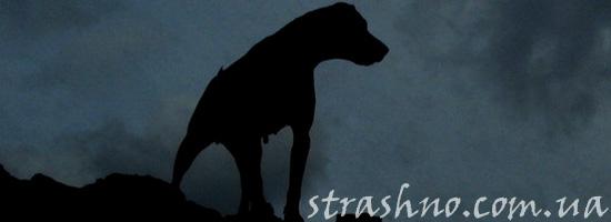 Собака-спаситель