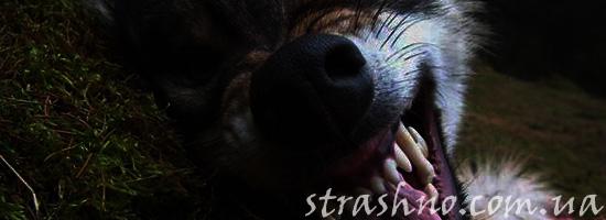 Жуткая собака