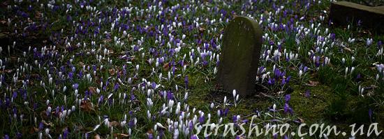 Не рвите цветы на могилах