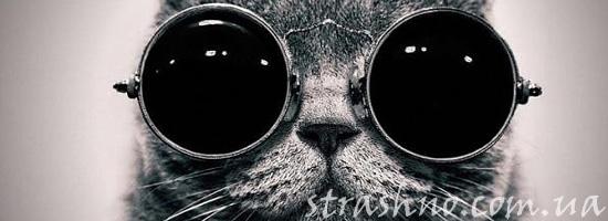 Могут ли коты ходить на задних лапах