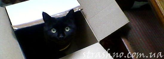 Коробка для домового