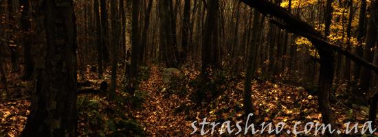 Страшное преступление в лесу