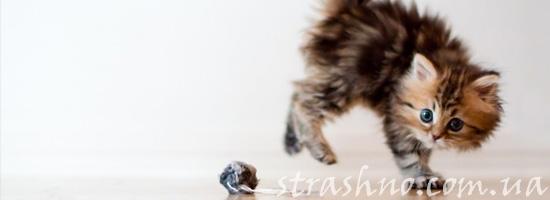 Игры котенка с мистическими сущностями