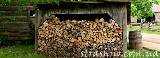 Вишни возле дровяного сарая