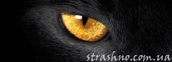 Страшные жетые глаза