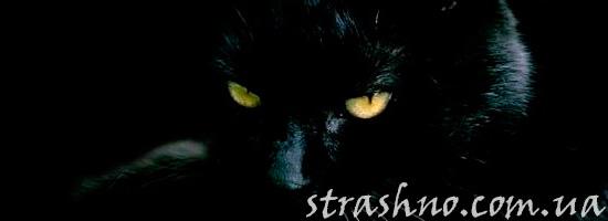 Истории о станных кошках