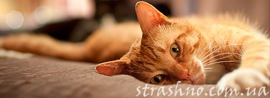 Пропавший рыжий кот